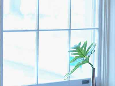 A small green plant next to a bright white french window.